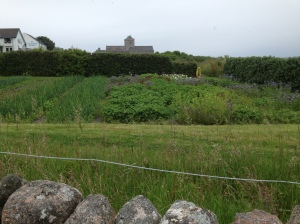 Kitchen garden with Iona cathedral in the background
